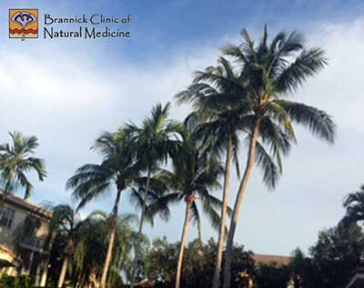 Palm Trees  |  Brannick Clinic
