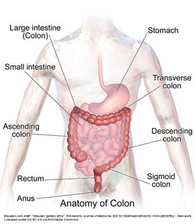 Colon Health: Colonics  |  Brannick Clinic